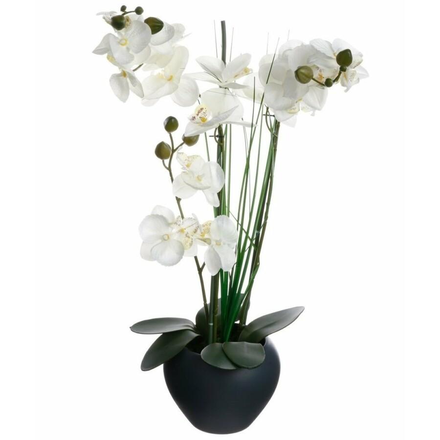 Dekoratív orchidea cserépben